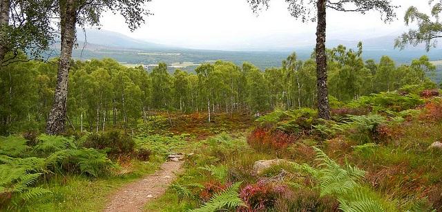 Aviemore in den schottischen Highlands flickr (c) Acradenia CC-Lizenz